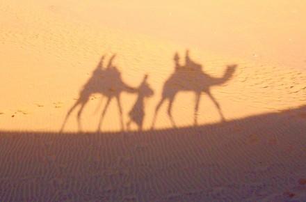 camel (1)